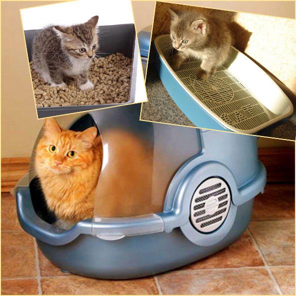 Как избавиться от кошачьего запаха из обуви в домашних условиях