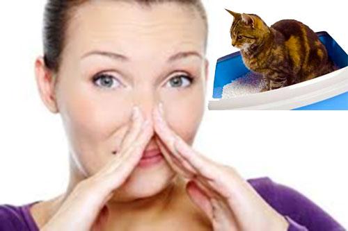 Аллергия на запах мочи котов