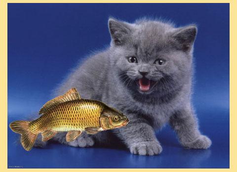 Котенок и карп