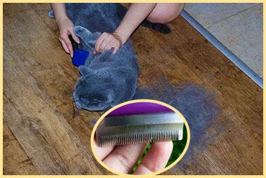 Вычесывание кошки фурминатором
