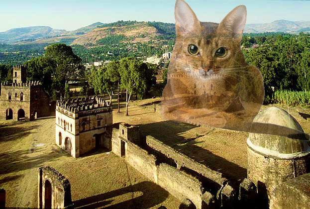 Эфиопия или Абисания родина абисанский кошек