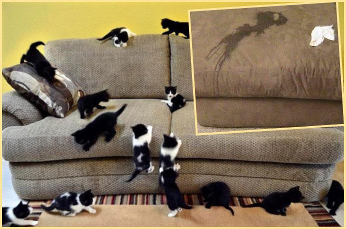 Кошки на диване и лужа от мочи