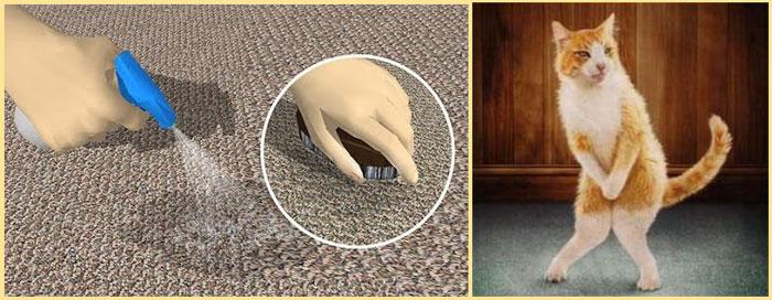 Кот уписался на ковре, и протирание лужи