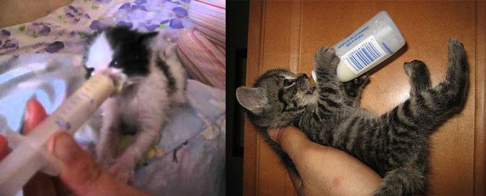 Котят кормят из бутылочек