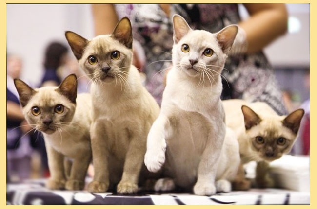 Кошки не аллергенные