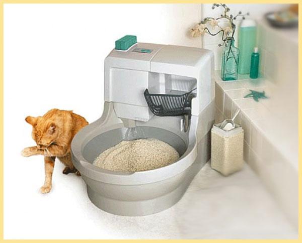Кот и кошачий туалет