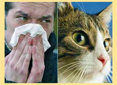 Мужчина с аллергией и кошка