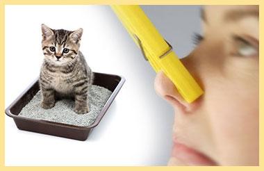 Котенок в туалетном лотке и дурной запах, заткнут нос