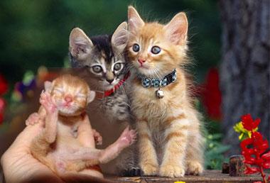 Котята и пол