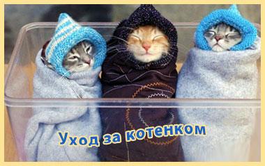 уход за котенком три укуатных котенка