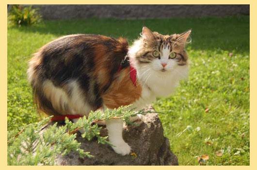 Кошка сибирская на дереве