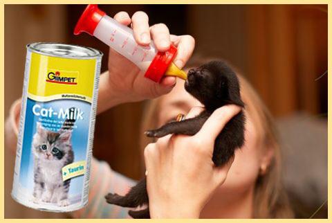 Кормление котенка смесью из бутылочки