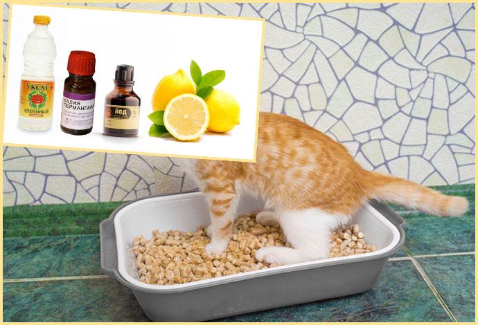 Котенок в туалетнмо лотке и средства от запаха мочи
