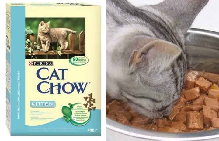 Кэт Чау - корм для кошек: цена, отзывы ветеринаров, состав