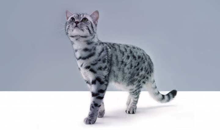 Кот из Вискаса