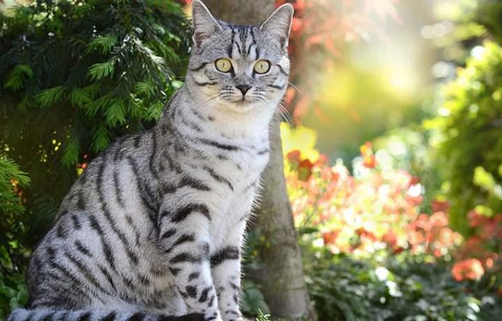 Кот из Вискаса на природе