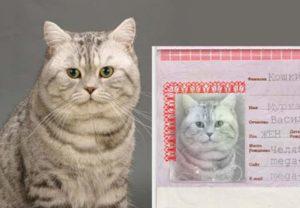 Паспорт кота
