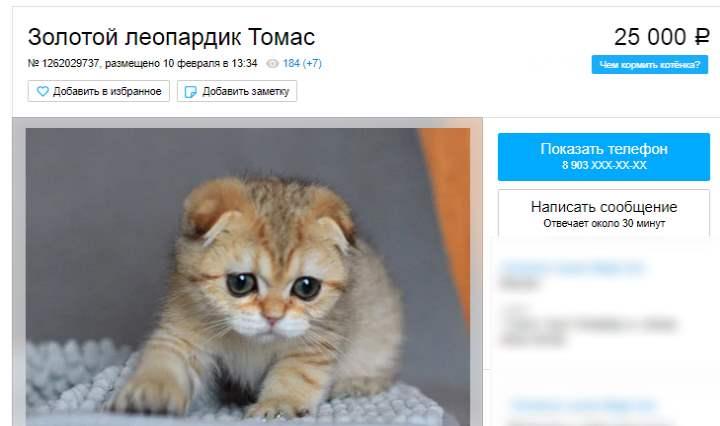 Кот за 25 тысяч