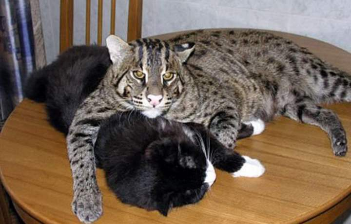 Друзья кота-рыболова
