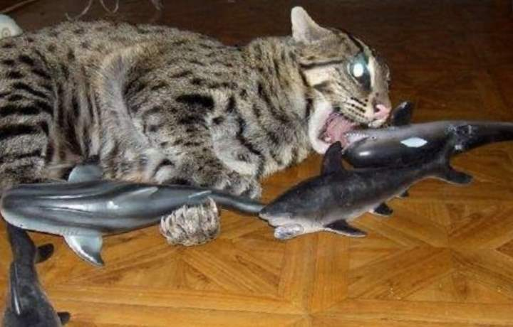 Игрушки кота-рыболова