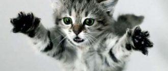 Смешные имена для кошек