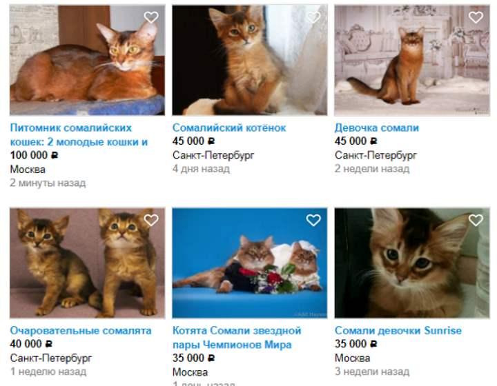 Стоимость кошек на сайте
