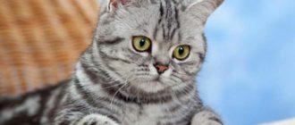 Полосатый кот Василий