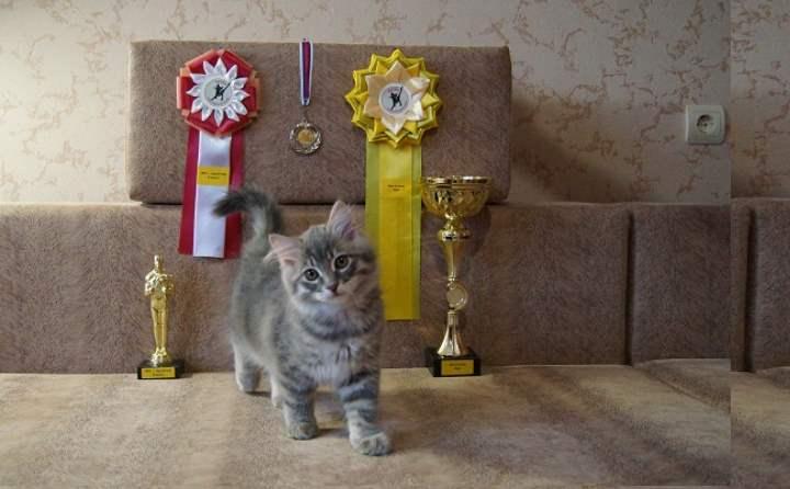 Беспородный кот на выставке