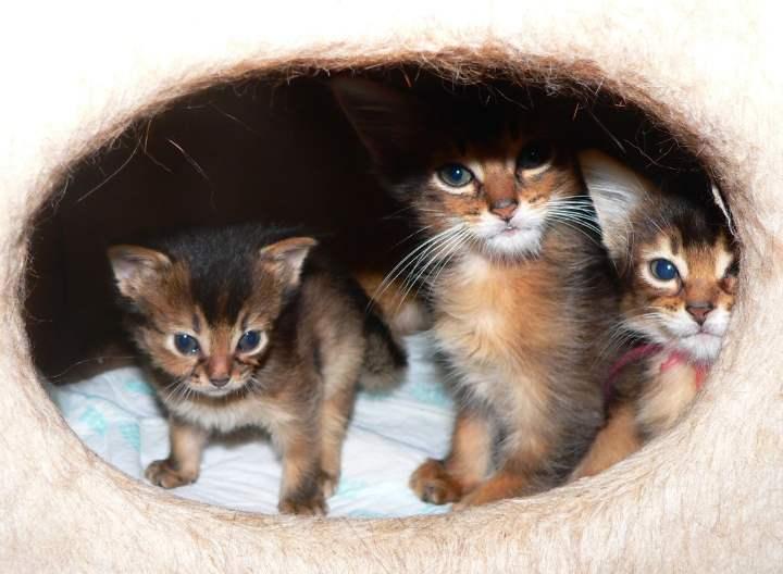 Дети кошки