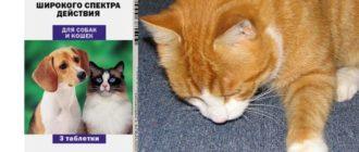 Кот и глисты