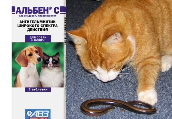 Альбен дозировка для кошек