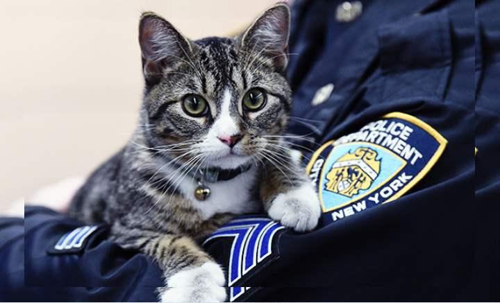 На руках полицейского
