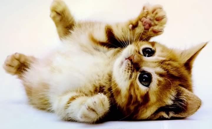 Кот лапками вверх