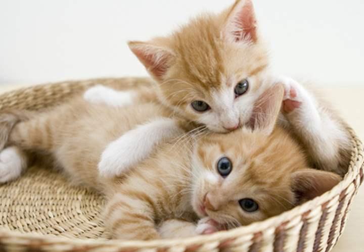 Список с красивыми и популярными кличками кошечек
