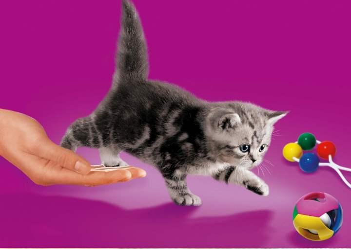 На фиолетовом фоне котенок