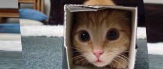 Какое успокоительное для кошек выбрать в домашних условиях