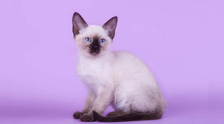 В этом возрасте котята исследуют новый мир и пробуют на зуб все, что попадается им на пути
