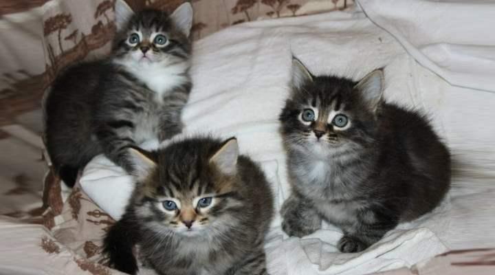 В 4-5 месяцев котенок уже похож на кота. И причины поноса у него такие же, как у взрослого