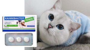 Показания к применению:«Каниквантел Плюс» для кошек