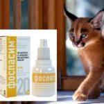 Лечение неврозов кошки
