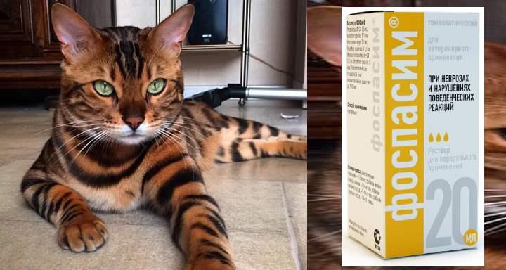Седативное для кошки