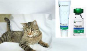 Ивермек для кошек: показания и инструкция по применению, отзывы, цена