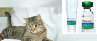 Нельзя делать инъекции ивермектина беременным и кормящим кошкам