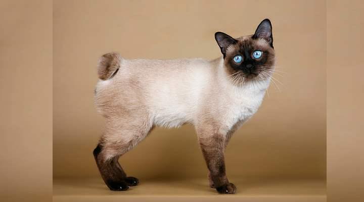Очаровательные кошечки с густой шерстью