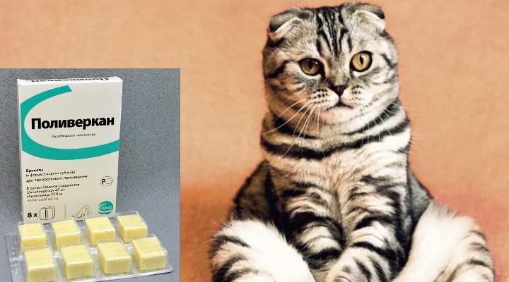 Некоторым кошкам нравится вкус сладковатой таблетки, и они едят ее с рук