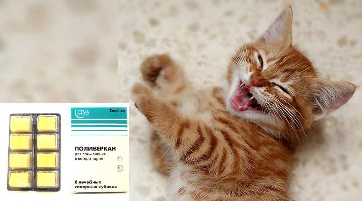 Для борьбы с ленточными червями в составе есть никлозамид. При попадании в организм червя этот препарат нарушает всасывание глюкозы, которая дает паразиту энергию. От этого глист погибает и выходит из организма естественным путем. Вещество практически не всасывается ЖКТ кошки и полностью выводится из организма.