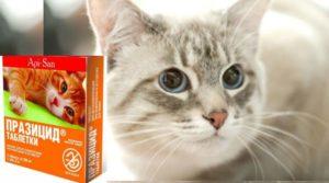 «Празицид» для котят – это лекарство от глистов широкого спектра