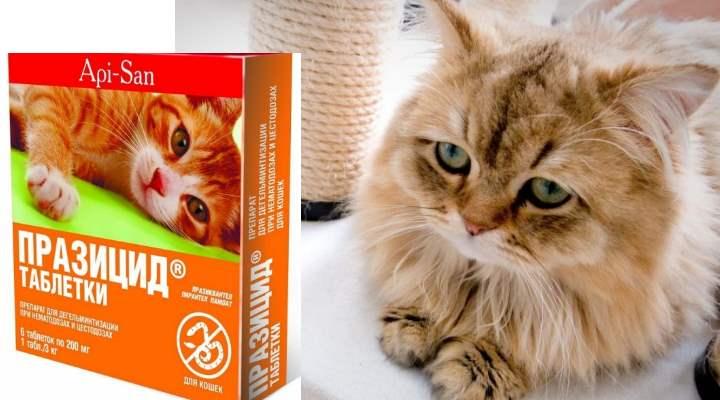 В составе таблеток «Празицида» содержится более 50 мг пирантелы