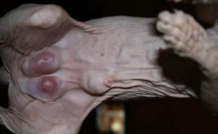 увеличение железы в размерах