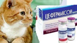 Цефтриаксон таблетки для кошек